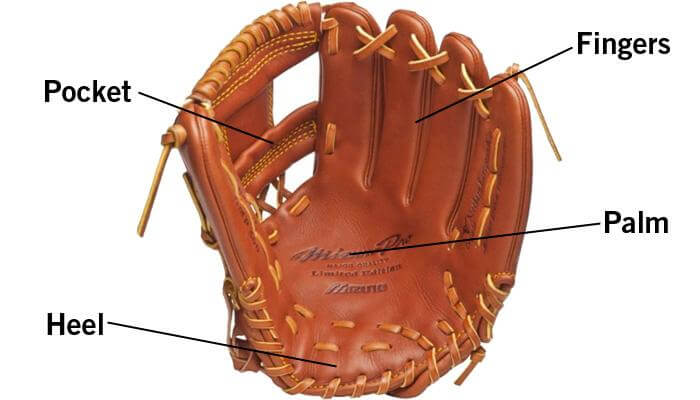 Parts of a Baseball Glove